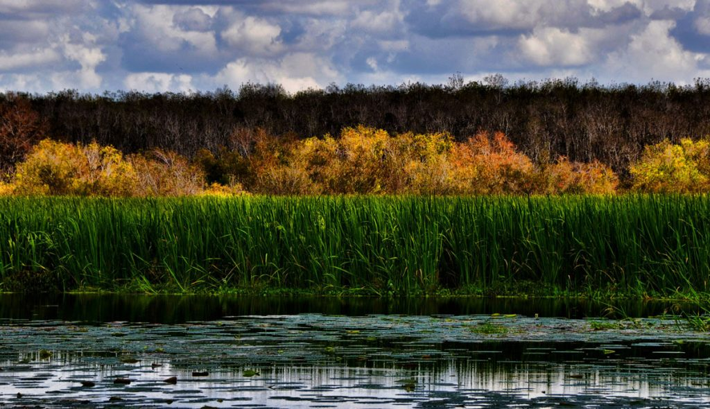 Brazos Bend Swamp