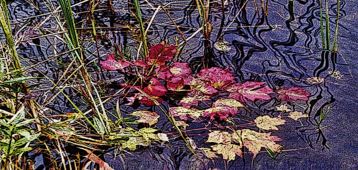 Leaves on Pond