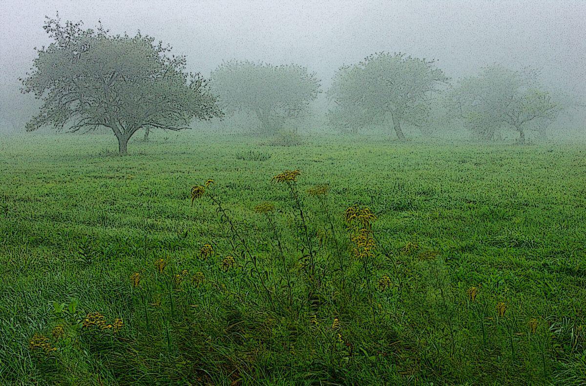 Orchard Fog 2