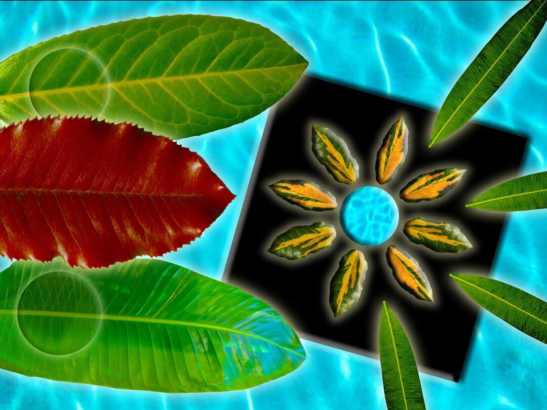 Pool Leaf Mandala